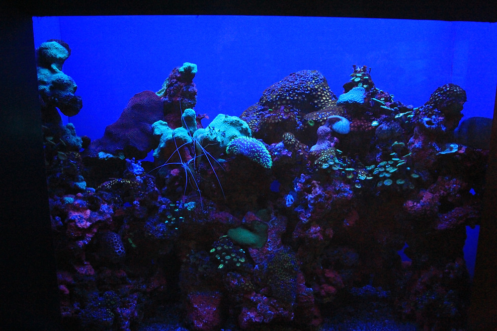 Wide angle view of the coral tank...