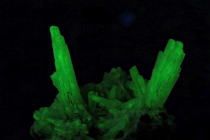 Elongated natrolite crystals fluorescing due to uranyl