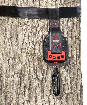 PTDD-900.tree.jpg