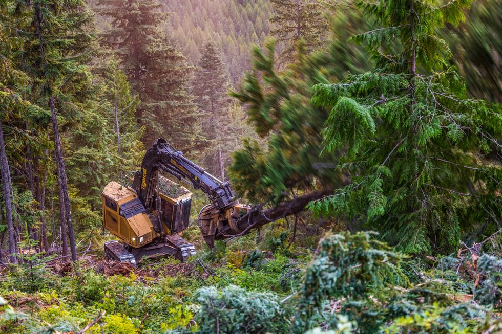 JEM Forestry
