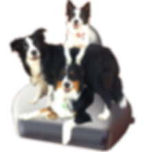 perros en transductor.png