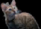 gato2_edited.png