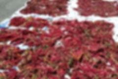 日曬臺灣紅藜