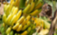 bananas7-825x510.jpg
