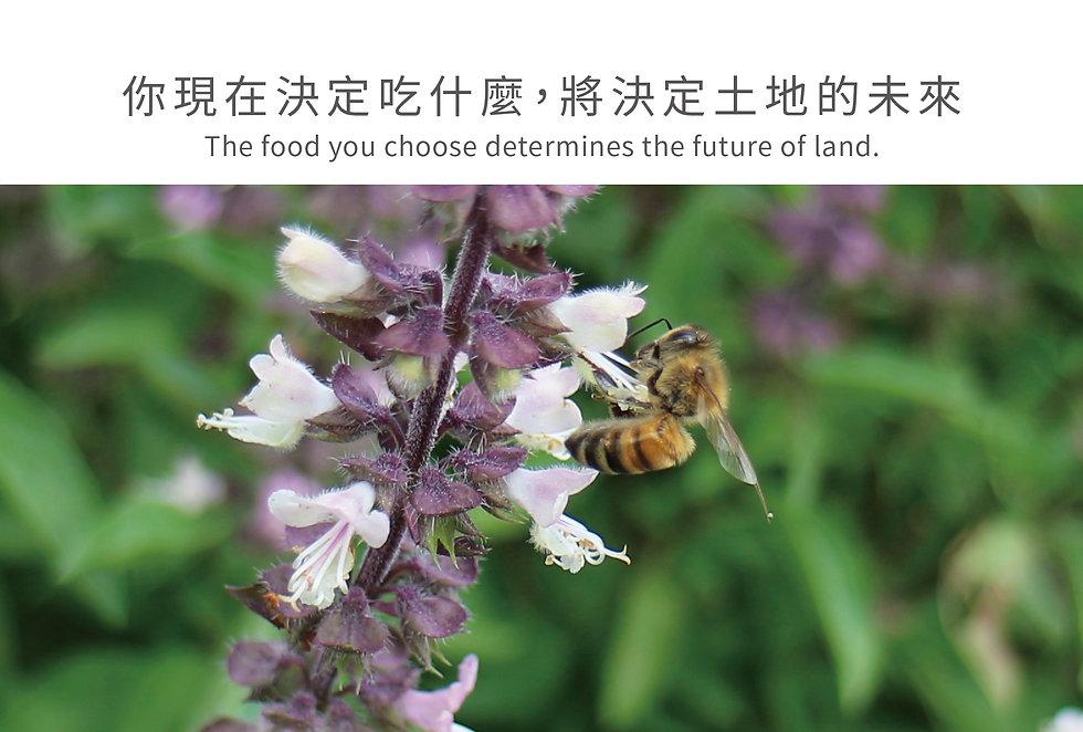 你決定吃什麼將決定土地的未來
