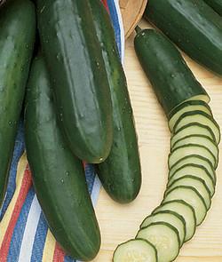Cucumber Early Pride Hybrid