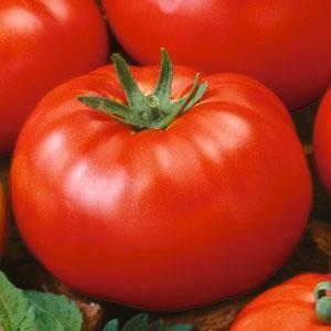 Tomatoes Beefstake