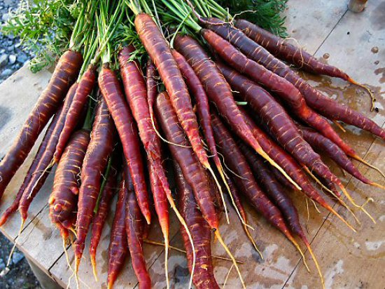 Carrots Purple Haze
