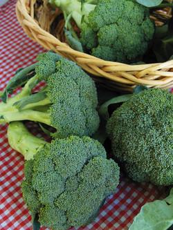 Broccoli Gypsy