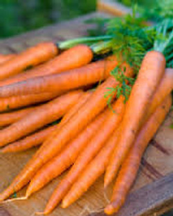 Carrots Red Danver