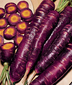 Carrot Purple Dragon