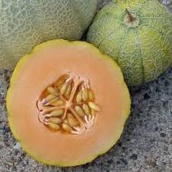 Cantaloupe Minnesota Midget