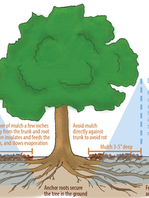 TreesWaterGraphicSimpleHighRes.png