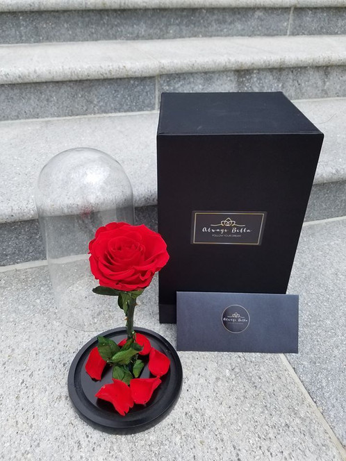Red Pion Preserved Rose Beauty And The Beast With Gl Dome Last 1 3 Years