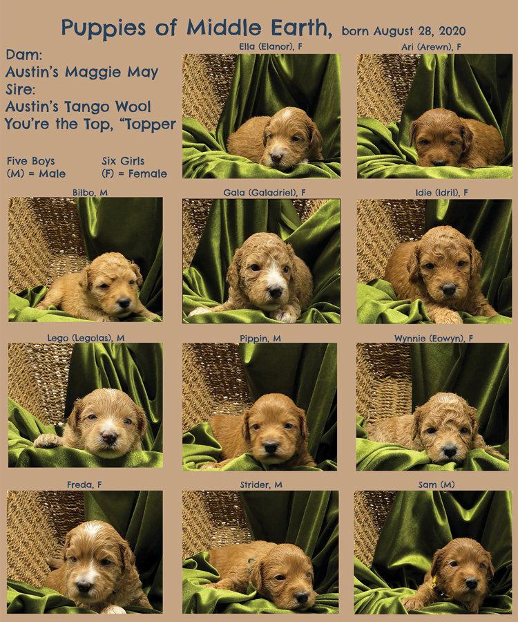 Week-3-Picture-Book.jpg