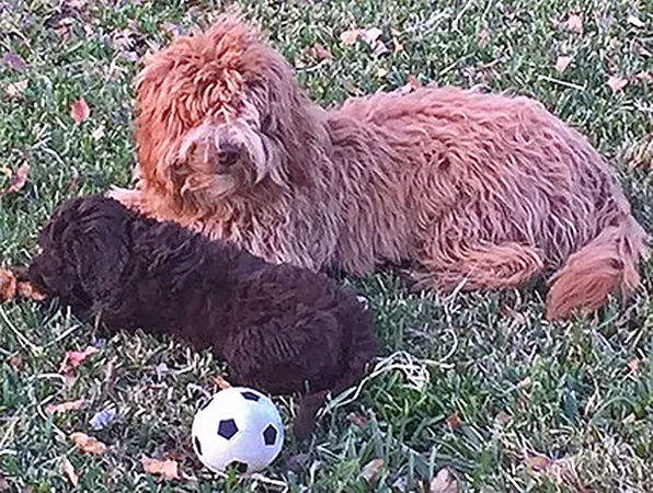 Maggie-and-Rosie-with-Ball.jpg