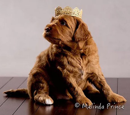 Maggie-with-Crown.jpg