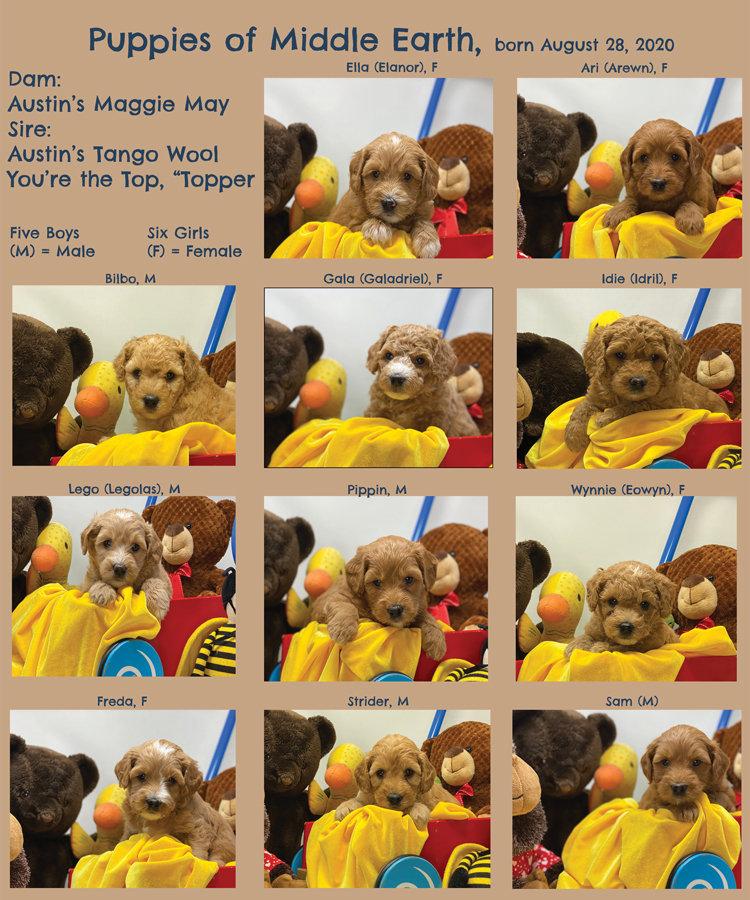 Week-5-Picture-Book.jpg