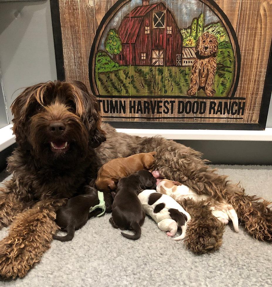 Bindy and Bailey Pups.jpg