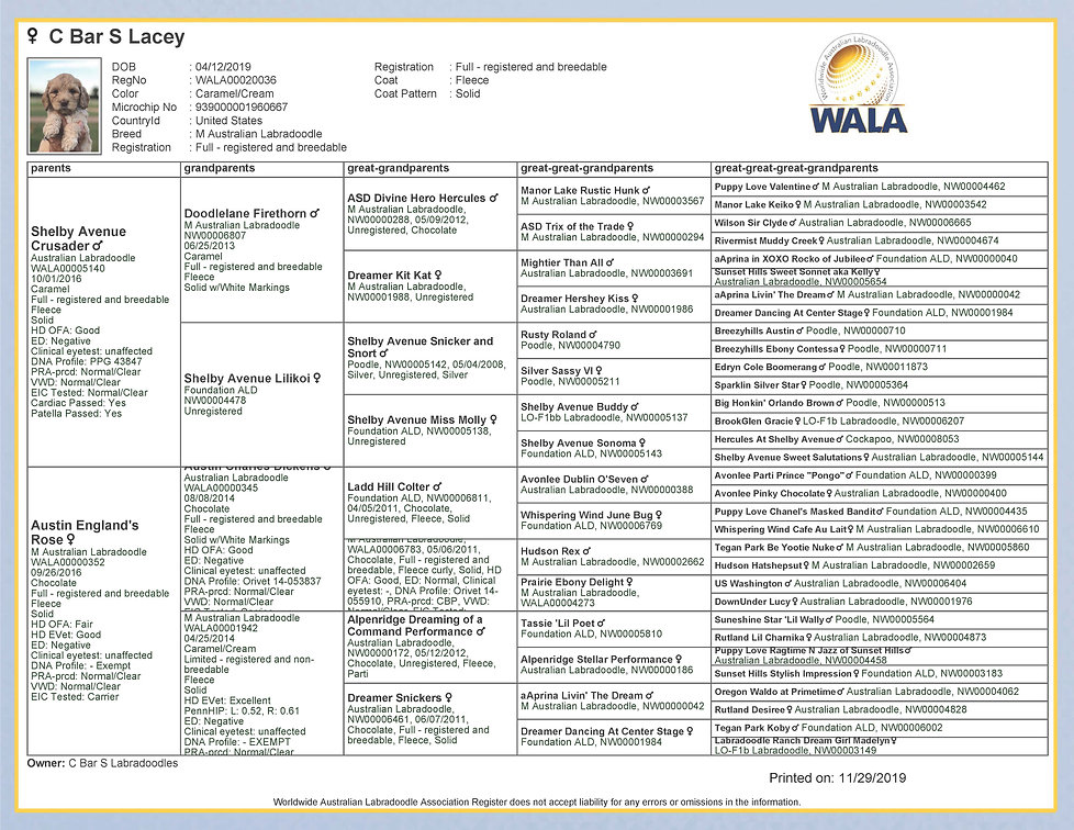 WALA-Pedigree---Lacey.jpg
