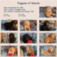 Week-7-Picture-Book.jpg