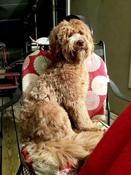 Maggie-on-Chair.jpg
