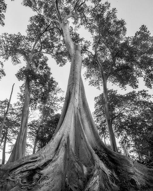 trees-2519650_1920_edited.jpg