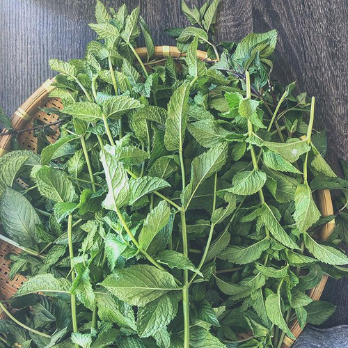 freshly harvested mint