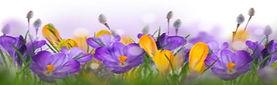 Spring header.jpg