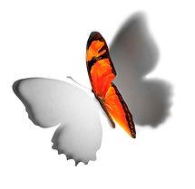 JMD_butterfly_no_text copy.jpg