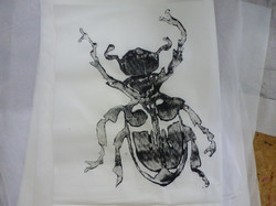 escarabajo.JPG