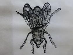 moscas.JPG