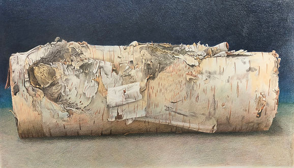 Davidson smaller birch log .jpg