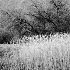 Grass and Trees, Crab Creek