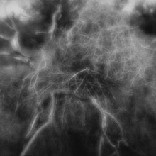 Sagebrush and Tumbleweed Tangle