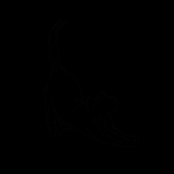 DEAR_CAT_A