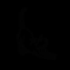 DEAR_CAT_A.png