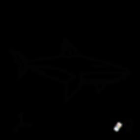 DEAR_SHARK_B.png