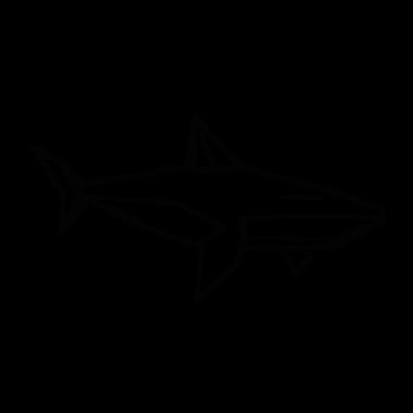 DEAR_SHARK_A.png