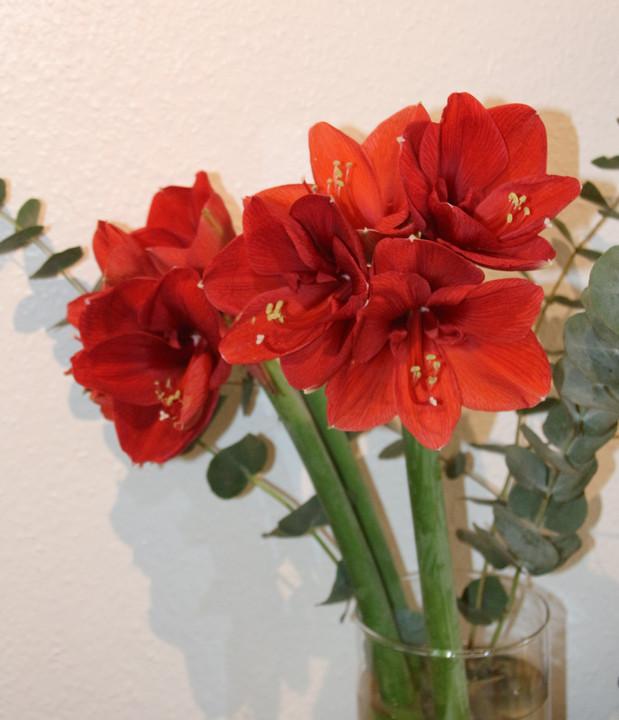 Blumen Wartezimmer