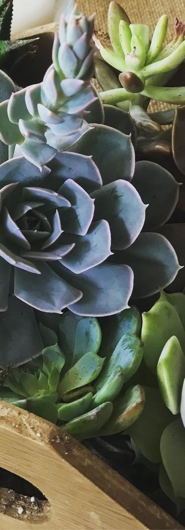 Succulent Table Centerpiece