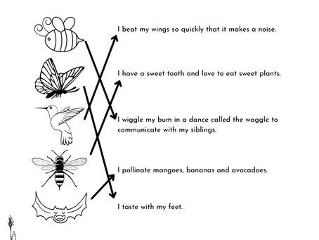 Pollinator Matching Activity Sheet (Answers!)