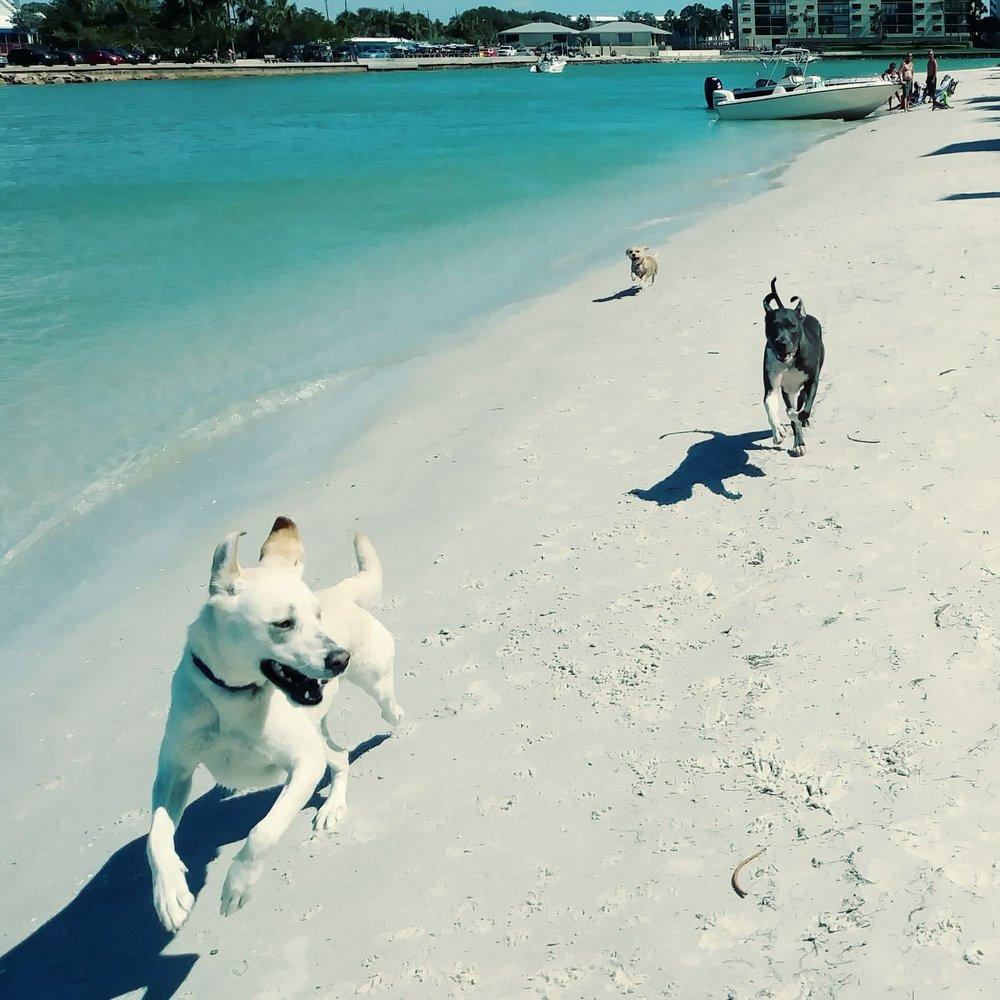 Sunset Beach Dog Beach on the Land's End Boardwalk