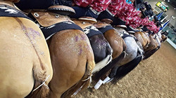 Flying Fillies butts and butts_edited