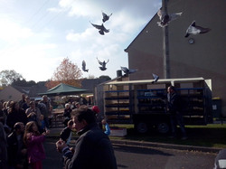 15 Art & Nature pigeons 2