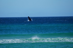 Whale watching .JPG