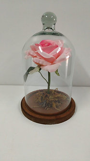 Redoma Encantada com rosa cor de rosa  Artificial
