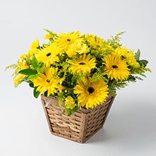 Cachepô com gerberas e flores amarelas
