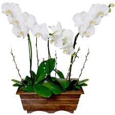 Jardineira de Orquídeas
