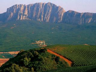 Under the Sicilian Sun: A Wine Lover's Guide to Sicilia DOC